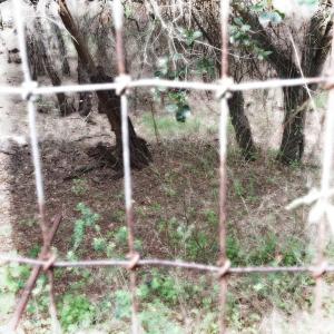 through a fence